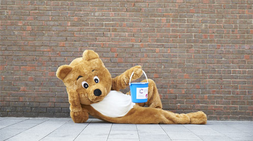 Bear fundraising