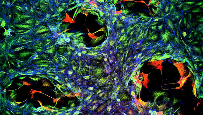 a colourful image of cells