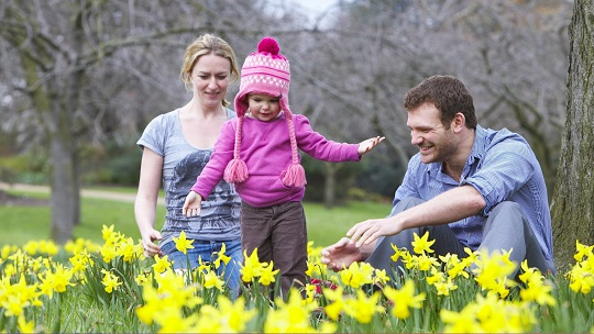 Parents with a young girl who is wearing a hat and playing in the daffodils at a park.