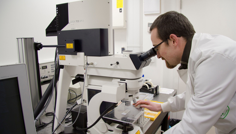 A researcher looking into a microscope