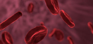 An illustration of blood cells