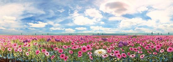 The Life Garden - a garden full of flowers.