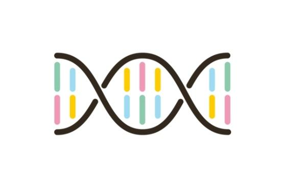 An illustration of a strand of DNA