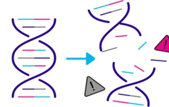 DNA damaged by chemicals in cigarettes
