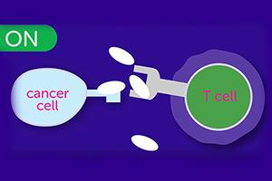 Immunotherapy Hero Image