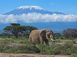 Mount Kilimanjaro Hike