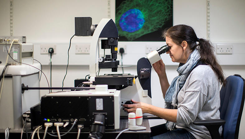 Scientist looking down a microscope
