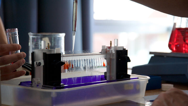 Pipetting liquid into a rack of tubes