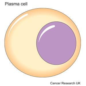 Diagram of a plasma cell