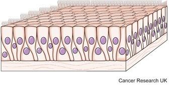 Diagram of glandular cells