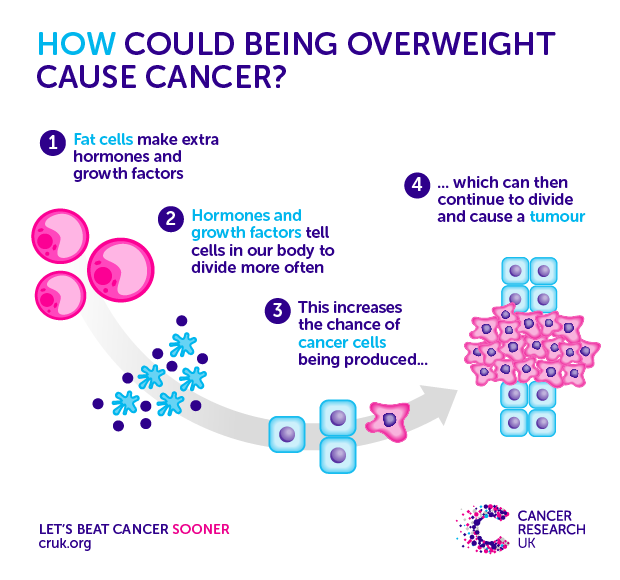 Does Obesity Cause Cancer Cancer Research Uk
