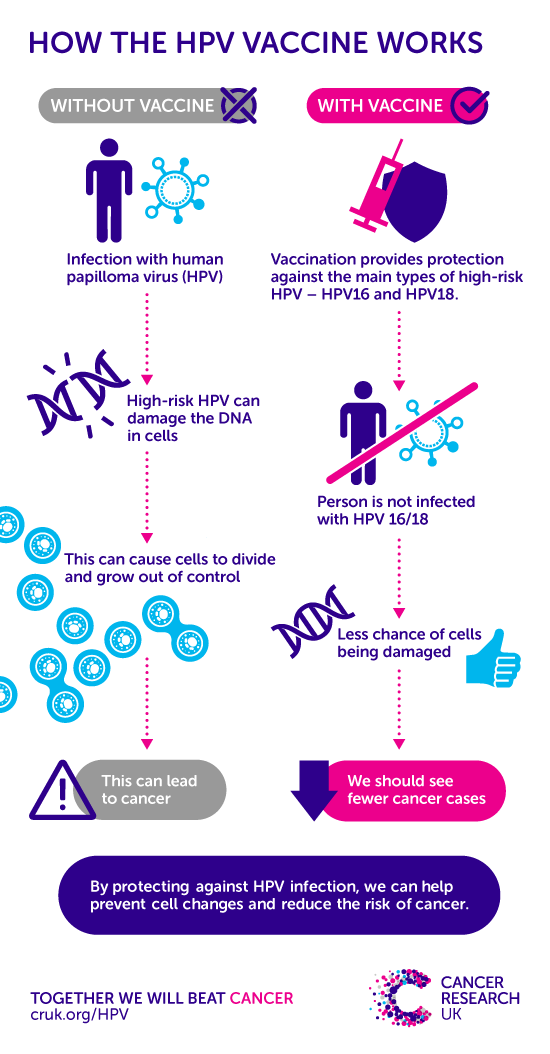 Hpv And Cancer Cancer Research Uk