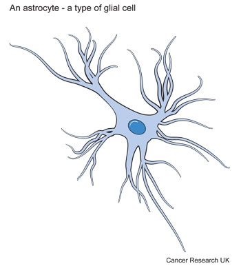Diagram of an astrocyte - a type of brain cell