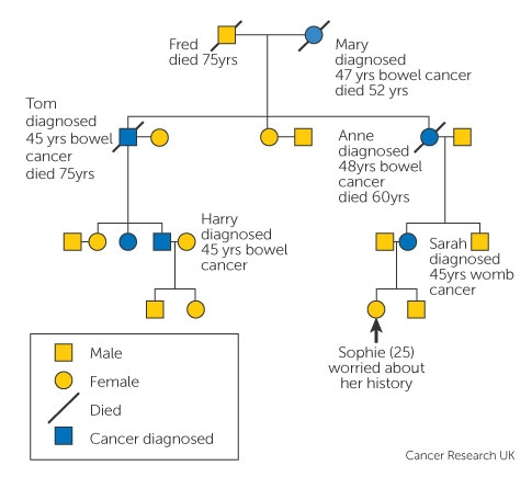 Family History And Inherited Cancer Genes Cancer Research Uk