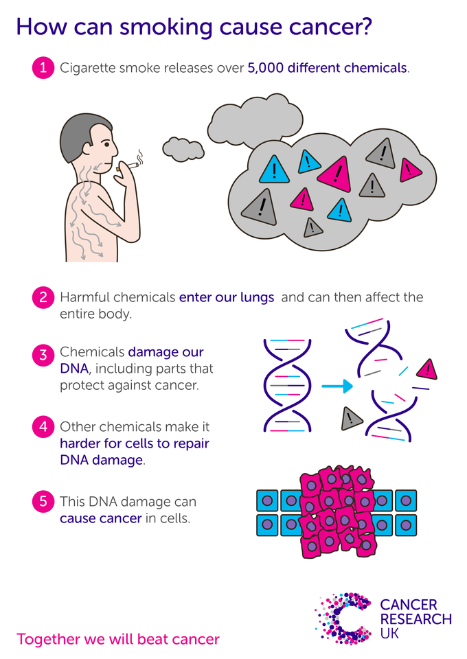 DNA is found in all our cells and controls how they behave. Even one cigarette can damage DNA. It's the build-up of DNA damage in the same cell over time that leads to cancer.