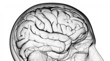 Graphic of a head and brain