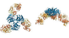 antibody crystal structure