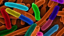 E. coli, via Wikimedia Commons