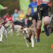 Dog Jog Milton Keynes