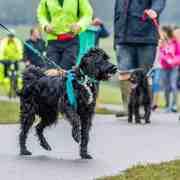 Woof Walkies is a sponsored charity dog walk event taking place in Stevenage, London